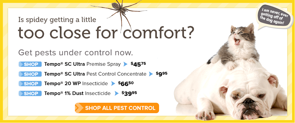 Get pests under control now