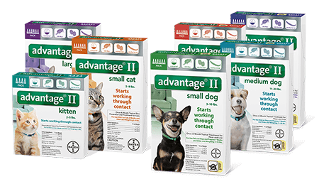 Advantage II for cats and dogs