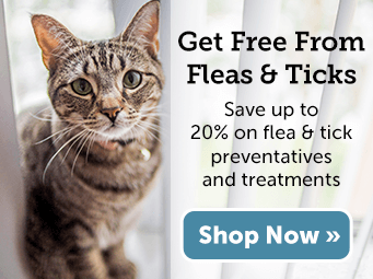 Shop Flea & Tick Solutions and SAVE