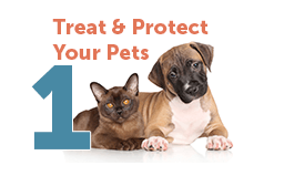 Treat Your Pets