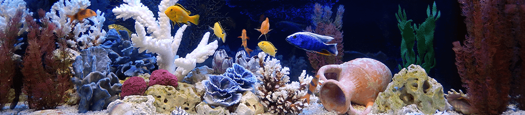 Fish Supplies and Aquarium Supplies