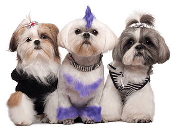 Shop Pet Grooming Supplies