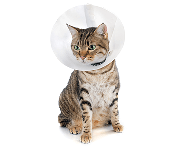 Shop Pet Medical Supplies