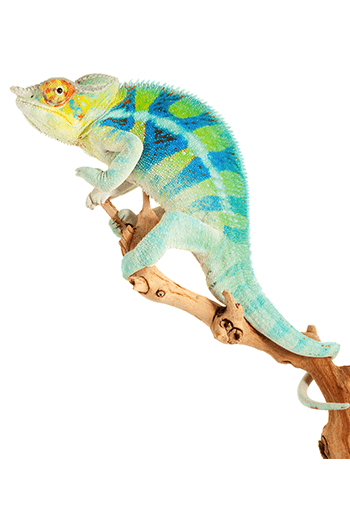 Shop Reptile Supplies