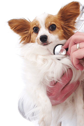 Shop Pet Flea Control