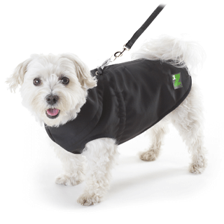 Shop 1Z Dog Coat, Size 12