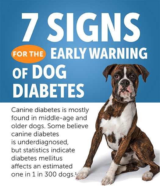 7 Signs of Diabetes in Dogs