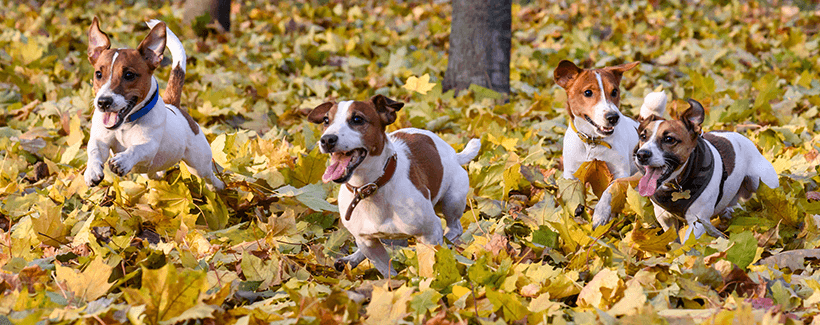 Keep Pets Safe This Fall: Autumn Health Tips