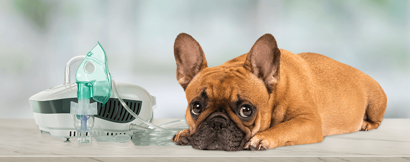Nebulizer Use for Dogs, Cats, and Other Pets