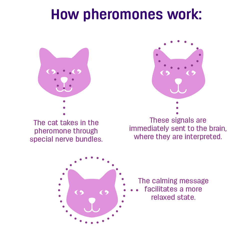 How Pheremones Work - Click for Larger View