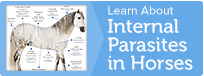 Learn more about internal parasites in horses